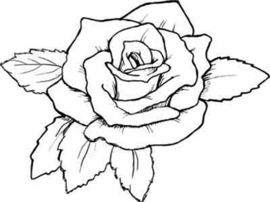 Pictures Of Roses To Color And Print Free Coloring Library