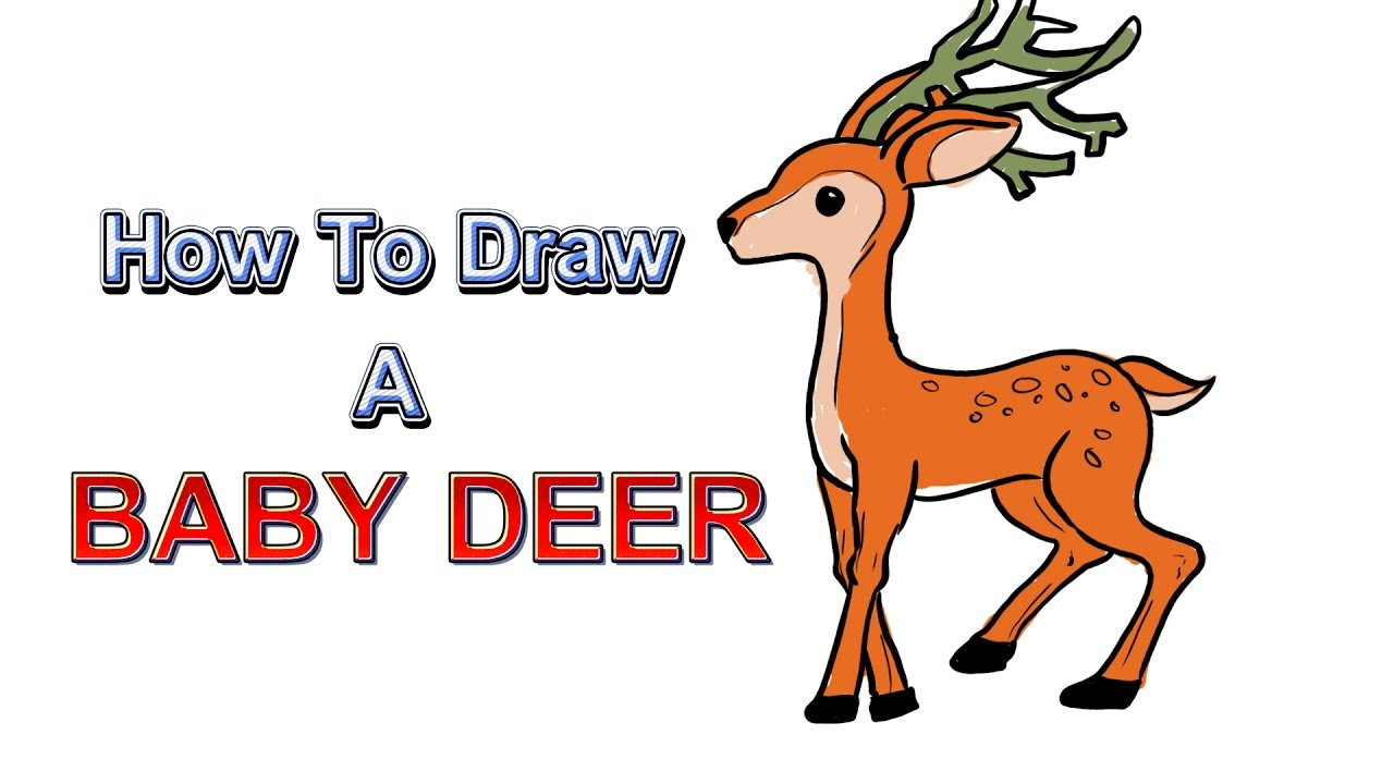 How To Draw A Baby Deer And Coloring