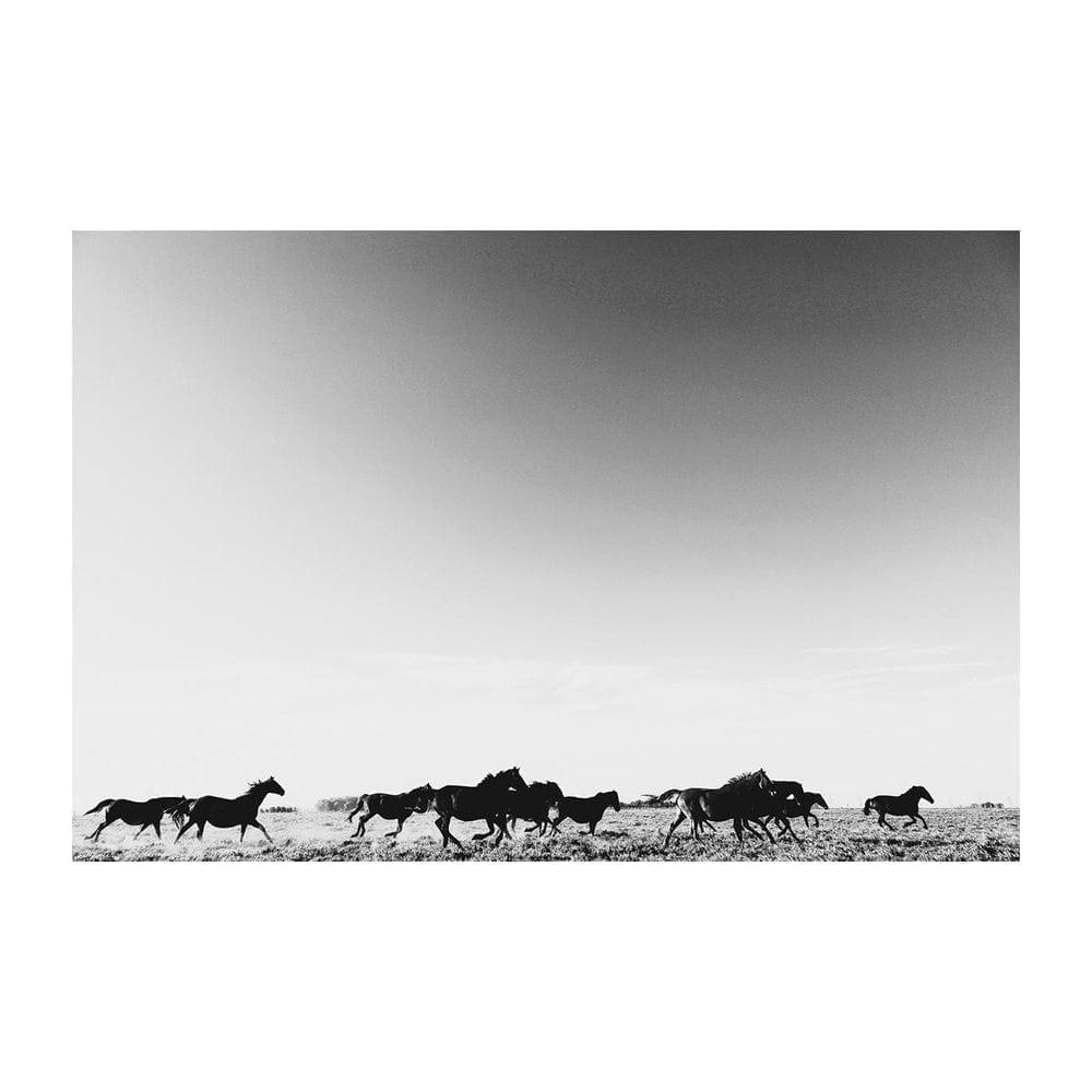 Pampa Black White Horse Print Artwork