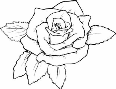 Pictures Of Roses To Color And Print  2568214