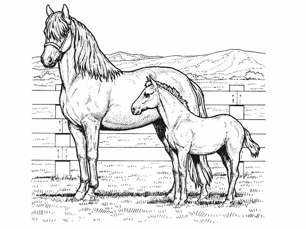 Realistic Horse Coloring Pages Interesting Professional Detailed