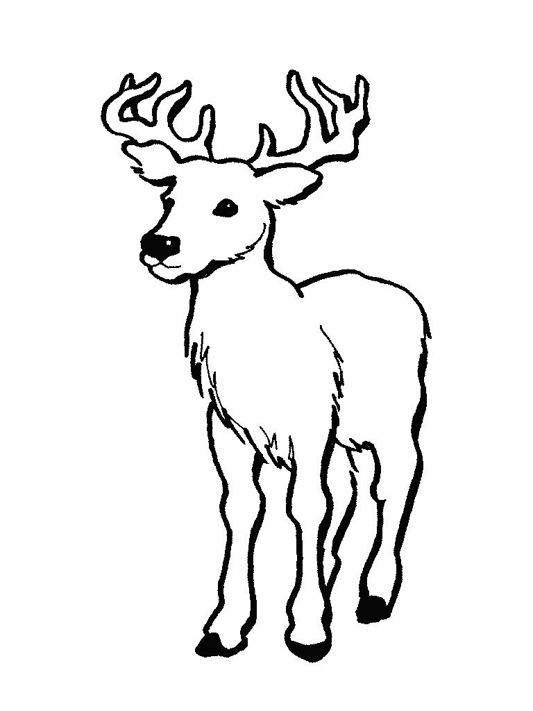 Simplistic Coloring Picture Of Deer Awesome Printable Pictures