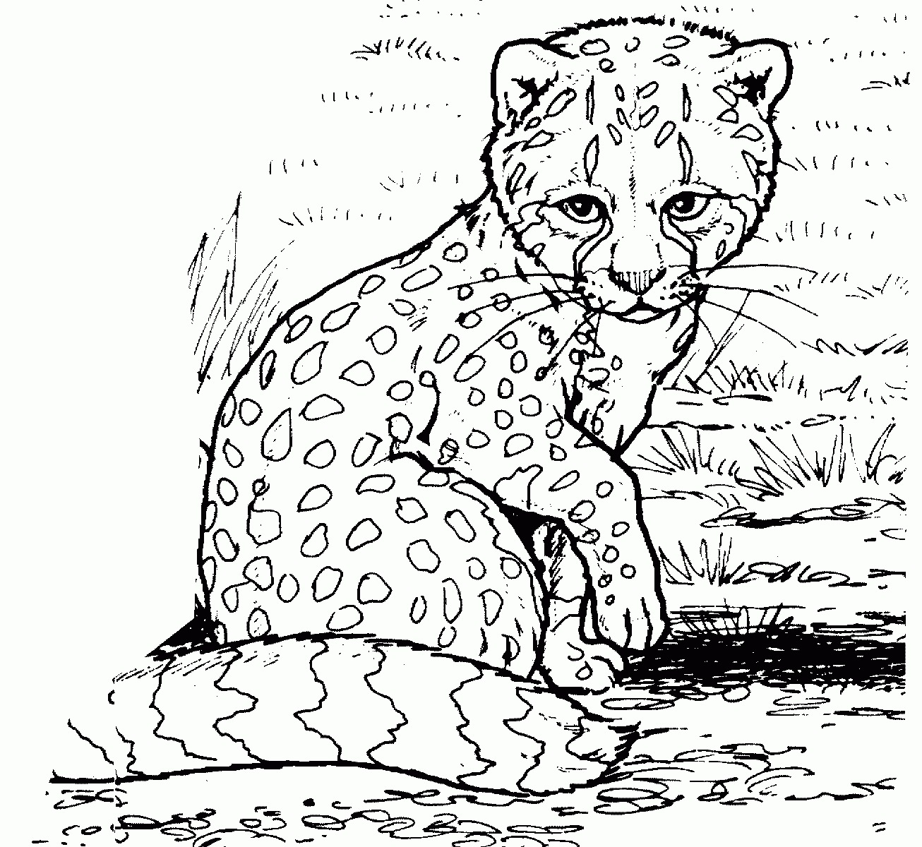 Baby Griffin Coloring Pages
