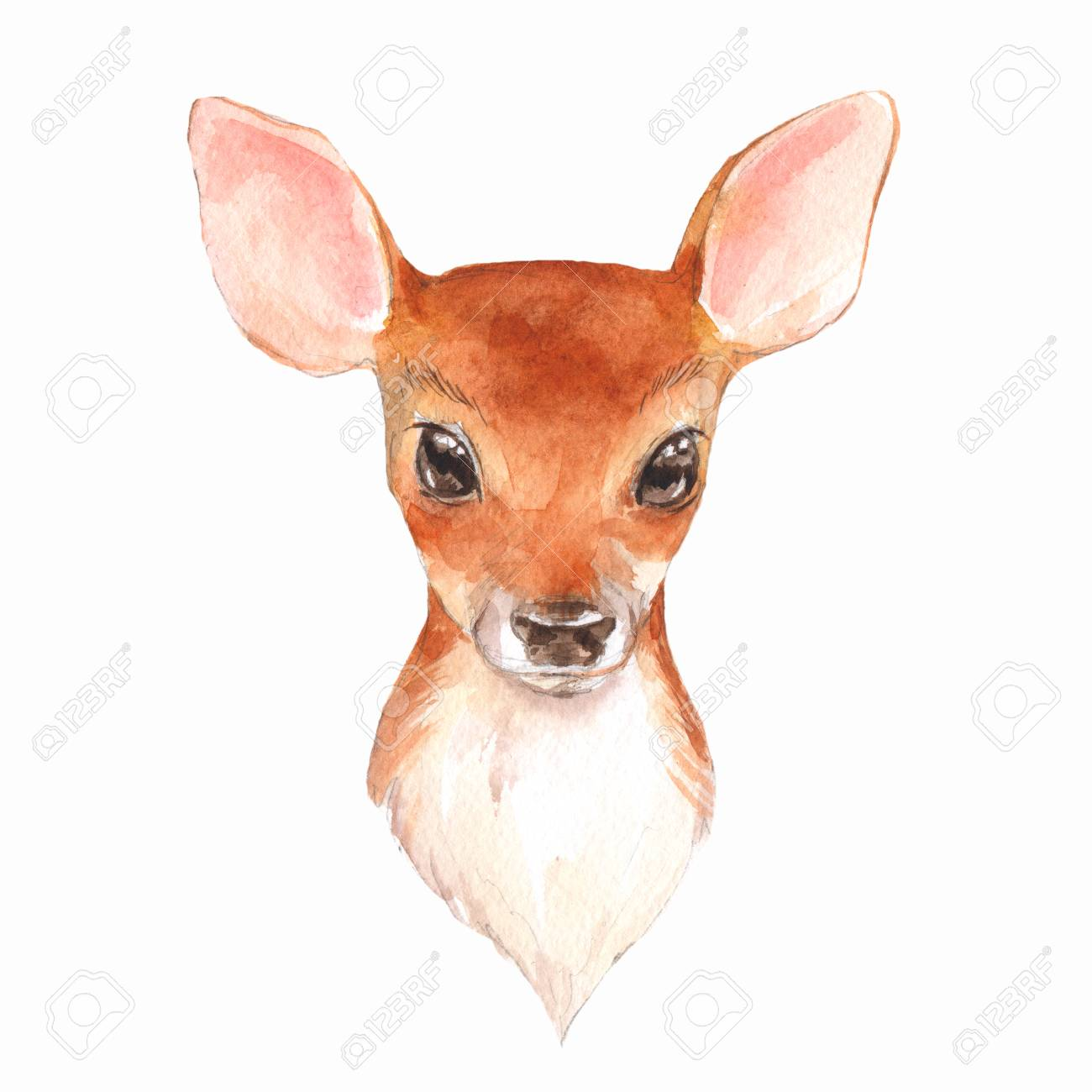 Baby Deer  Hand Drawn Cute Fawn  Watercolor Illustration Stock
