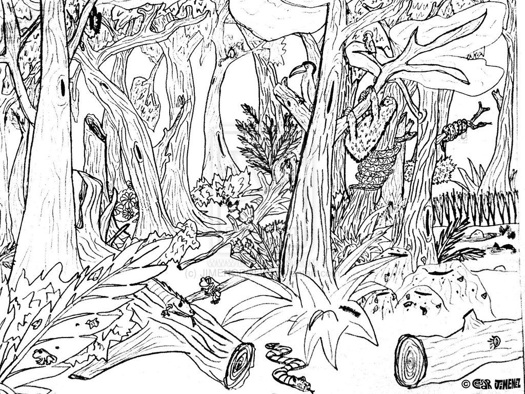 Hard Forest Animals Coloring Pages