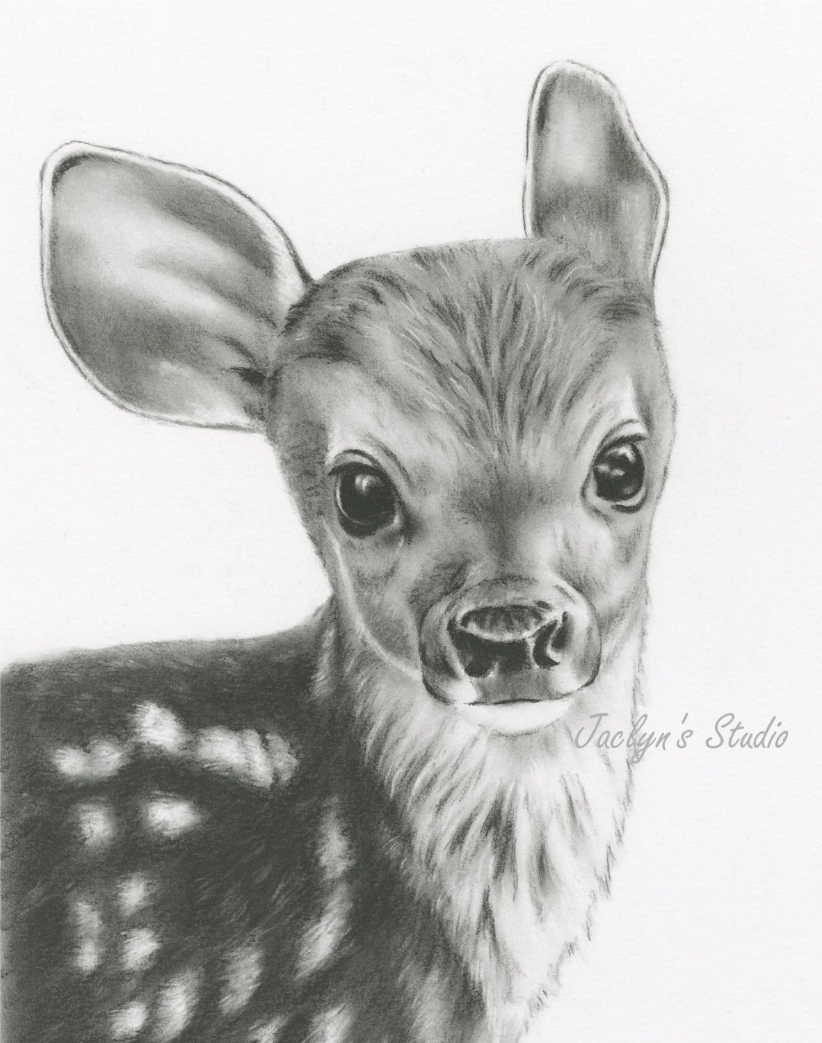9 Deer Drawing Baby Deer For Free Download On Ayoqq Org
