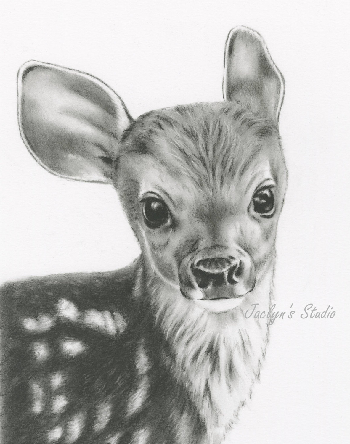 5 Buck Drawing Fawn For Free Download On Ayoqq Org