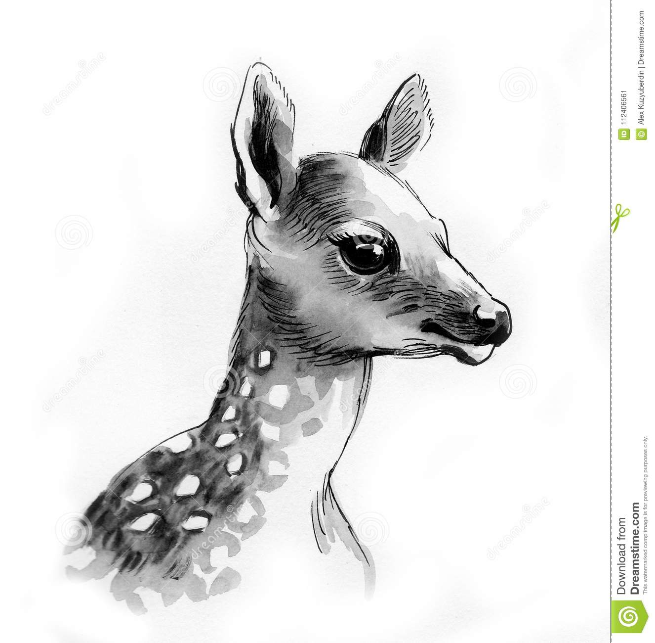 Baby Deer Stock Illustration  Illustration Of Drawing