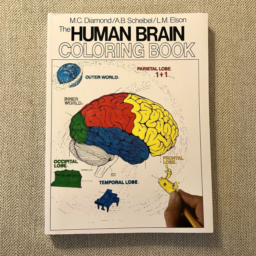 New The Human Brain Coloring Book By Diamond Scheibel Elson