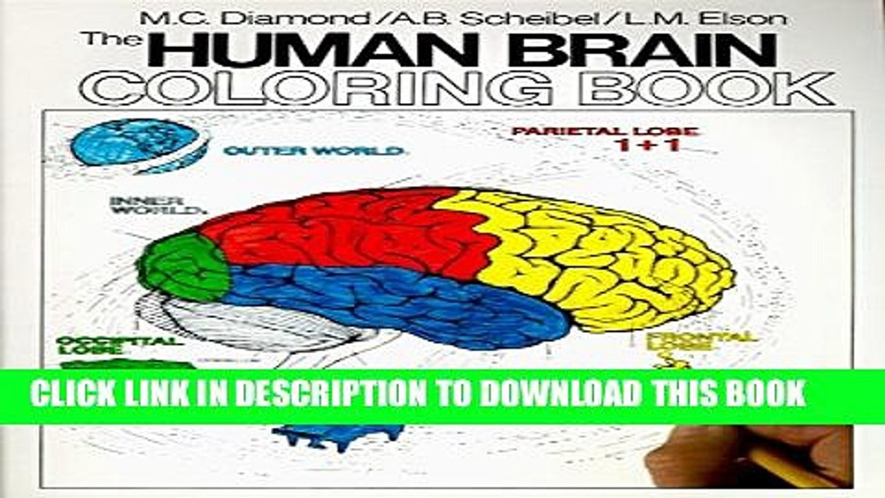 Pdf] Human Brain Coloring Book Popular Online
