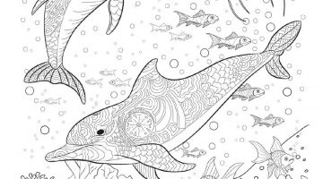 Adult Stress Coloring Books