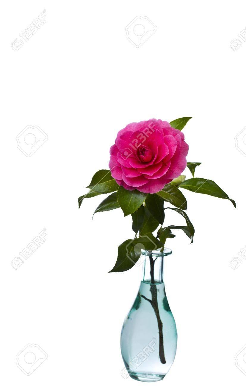Native Washington State Flower In Full Bloom In Blue Glass Vase