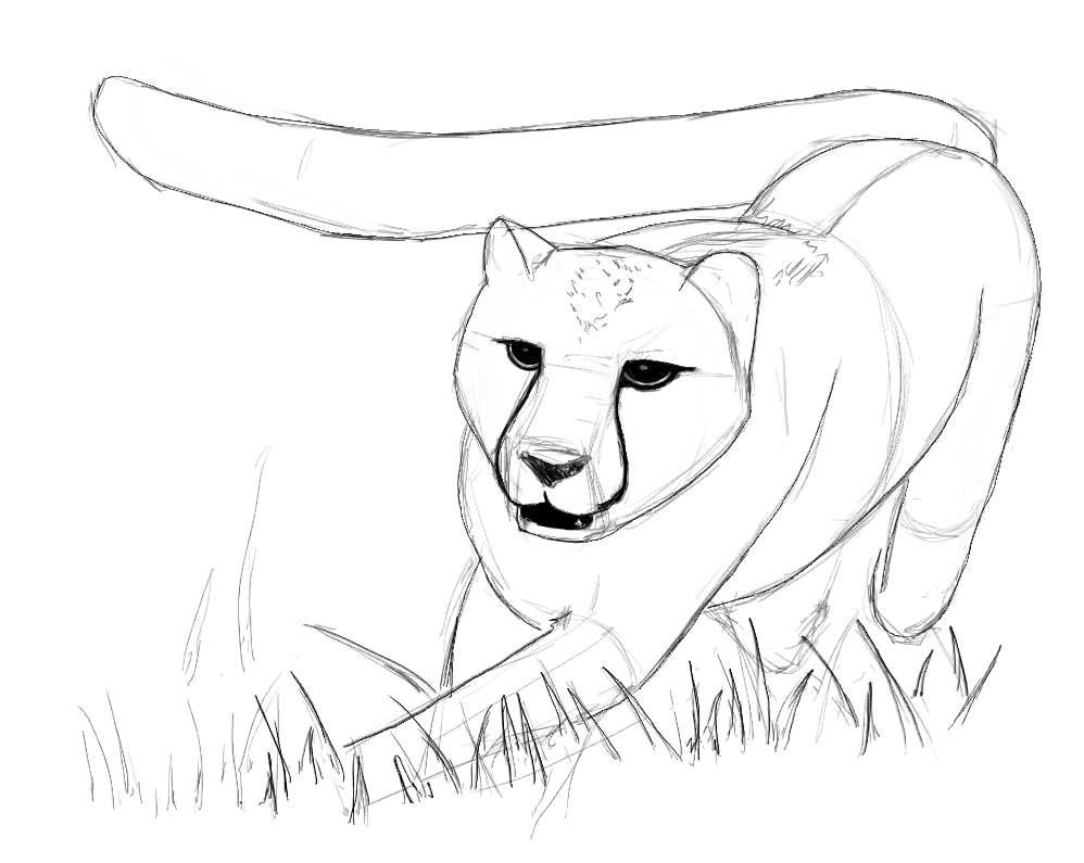 Easy Cheetah Drawings Free Image