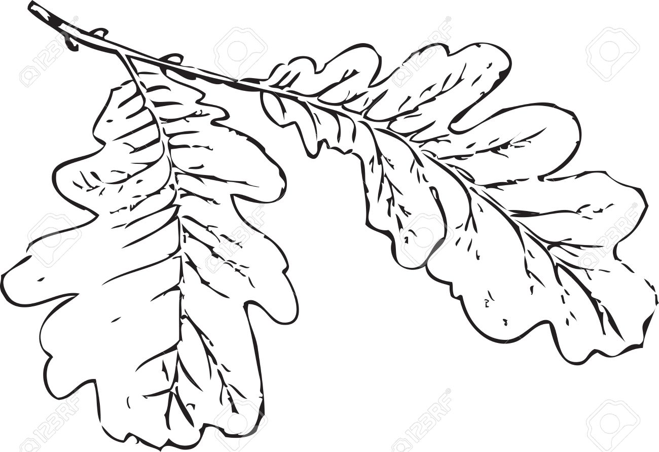 Tree Branch Oak Leaves Tree Schedule Drawing Sketch Image