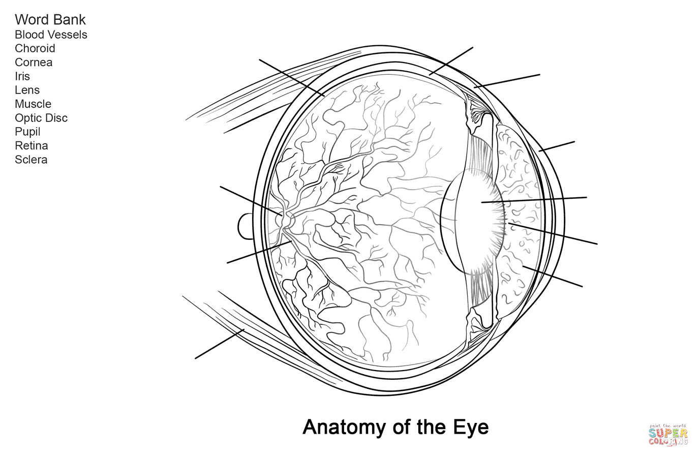 Human Eye Anatomy Worksheet Coloring Page From Anatomy Category