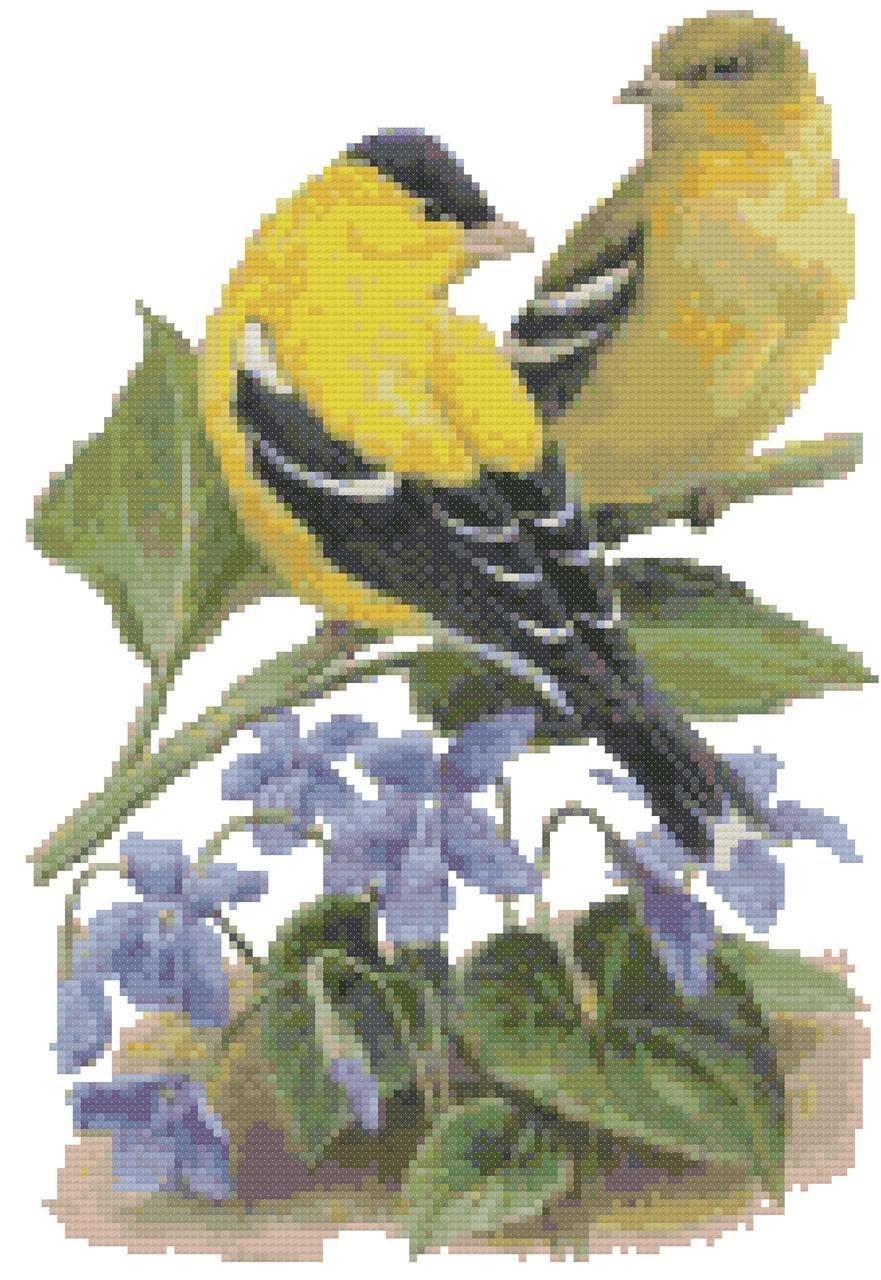 New Jersey State Bird And Flower American Goldfinch And Violet