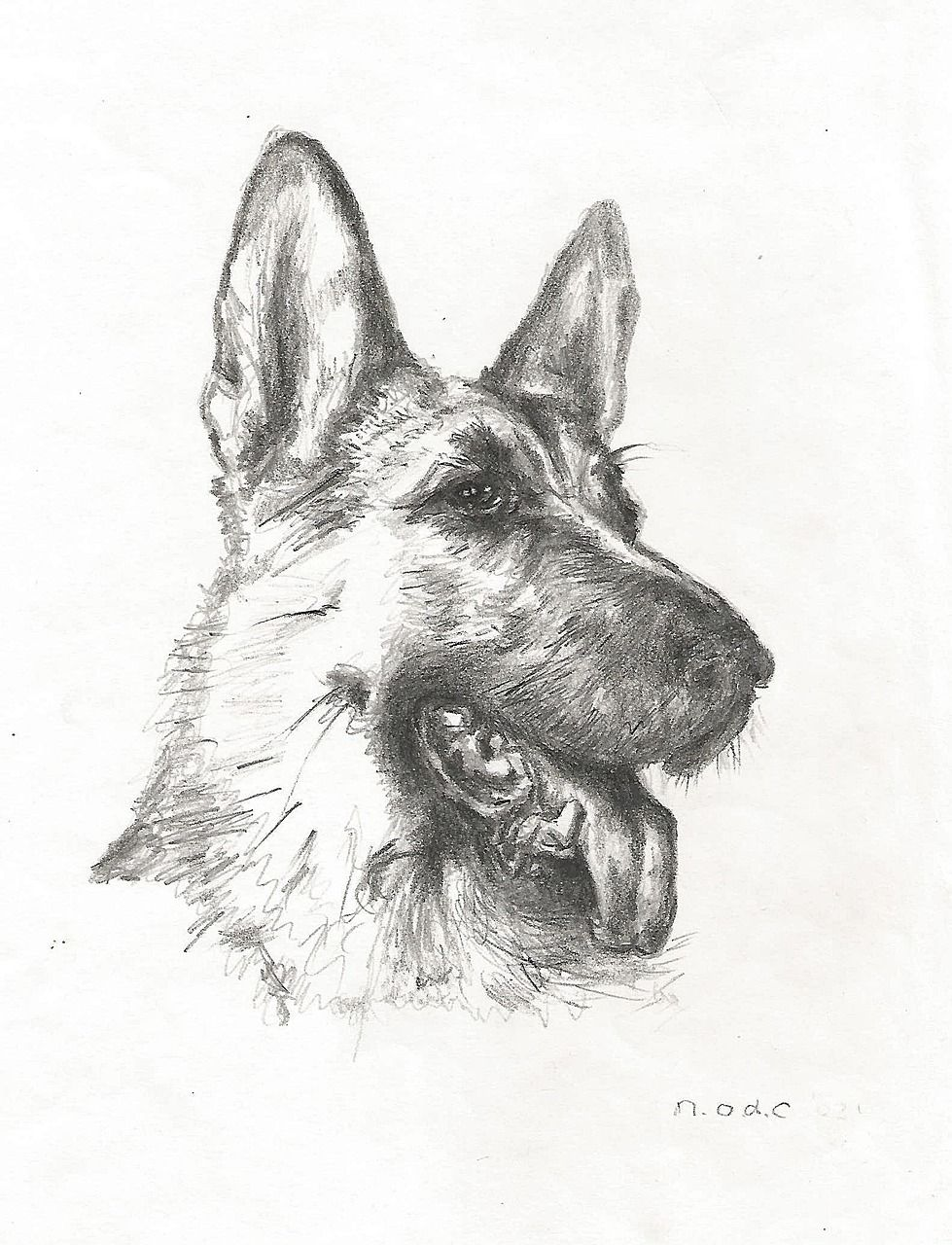 7 Easy Step By Step Tutorials On How To Draw A German Shepherd Dog