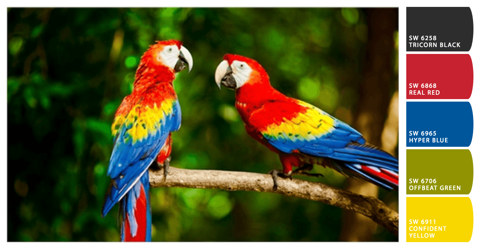 Home Color Scheme Inspiration  Scarlett Macaw Palette