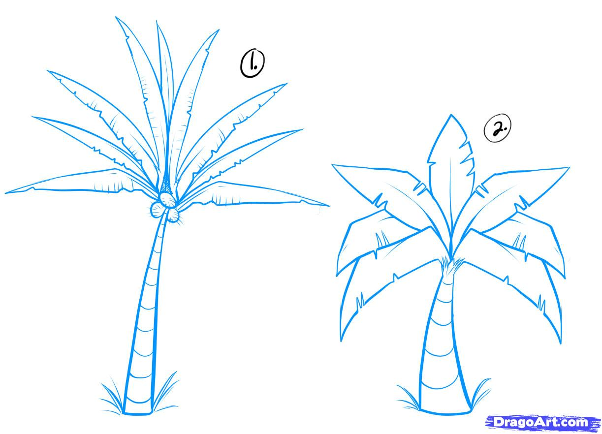How To Draw Palm Trees, Step By Step, Trees, Pop Culture, Free