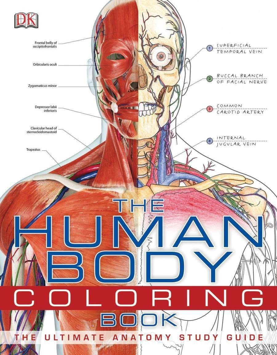 Amazon Com  The Human Body Coloring Book  The Ultimate Anatomy