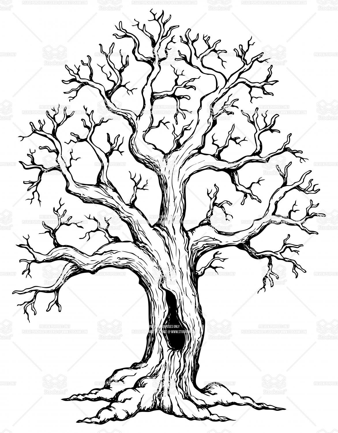 Oak Tree Drawings With Roots