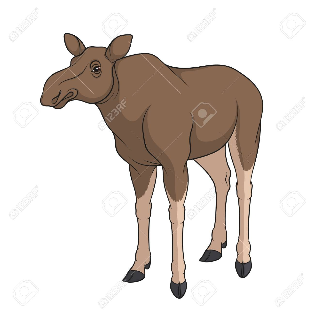 Color Image Of Elk, Moose  Isolated Vector Object On White