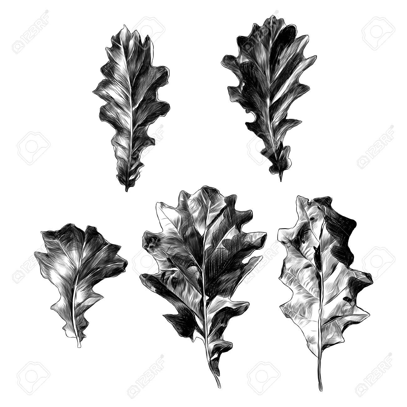 Set Of Oak Leaves Five Elements, Sketch Vector Graphic Monochrome