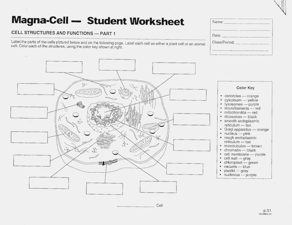 Animal Cells Worksheet Answers Lovely Plant Cell Coloring Page