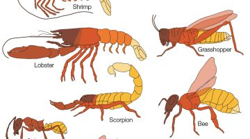 Arthropod Coloring Worksheet