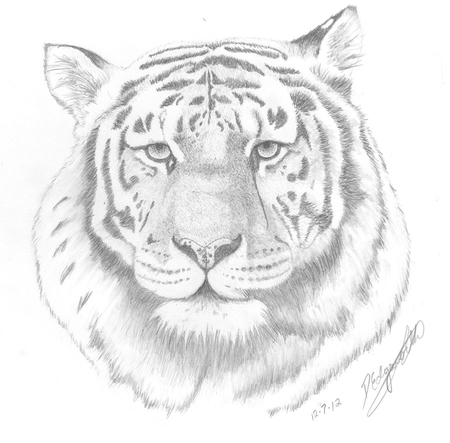 Bengal Tiger Face Drawing