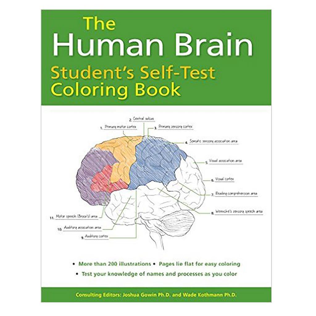The Human Brain Student's Self