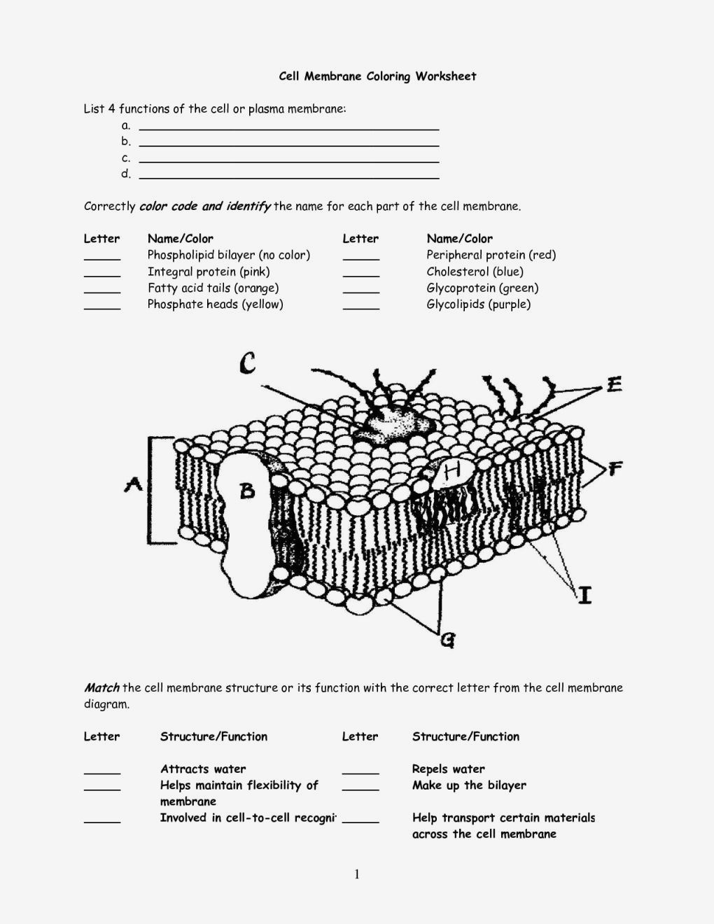 Cell Membrane Structure And Function Worksheet