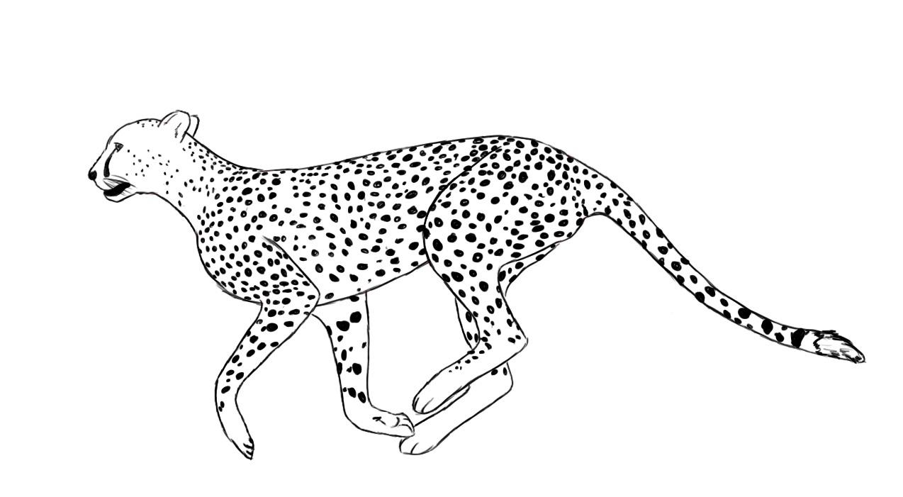 Cheetah Drawing For Kids And Cheetah Drawing Easy Cheetah Drawing