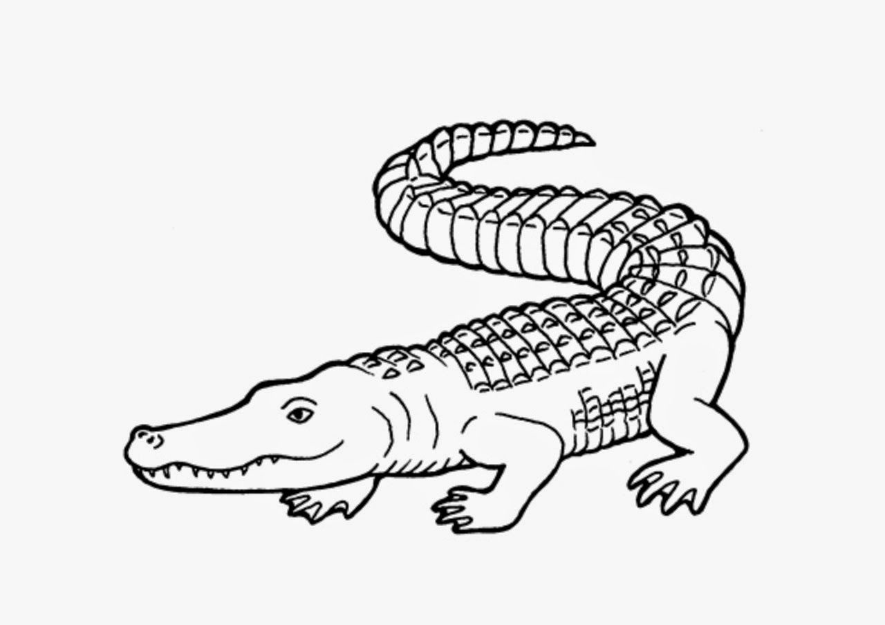 12 Child Drawing Crocodile For Free Download On Ayoqq Org