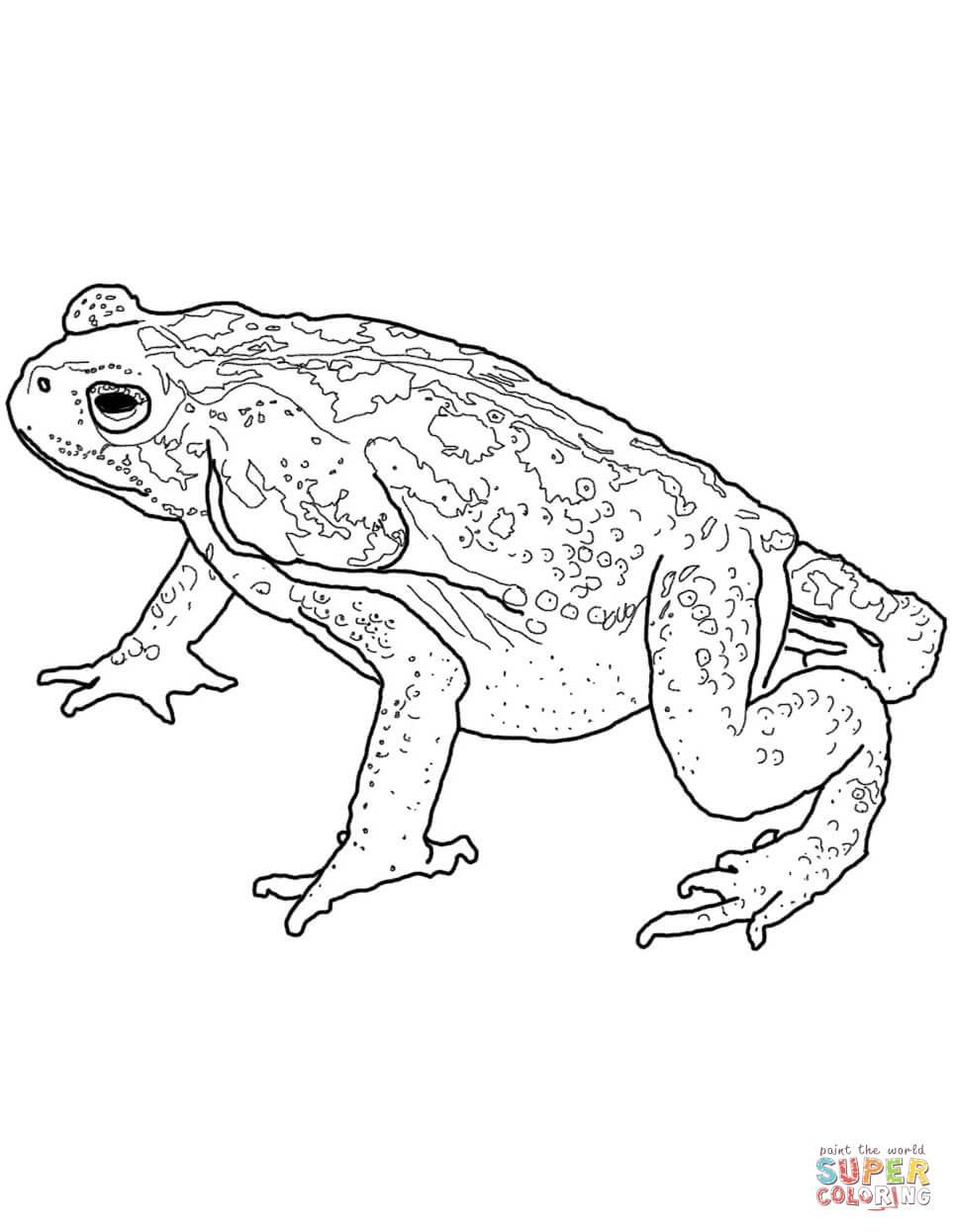 Colorado River Or Sonoran Desert Toad Coloring Page
