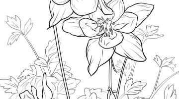 California State Flower Coloring Pages