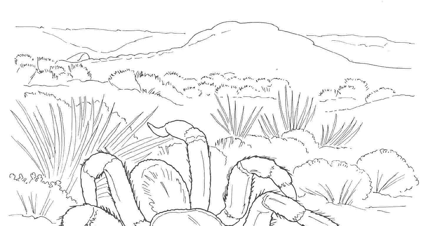 Desert Coloring Pages 16  52223