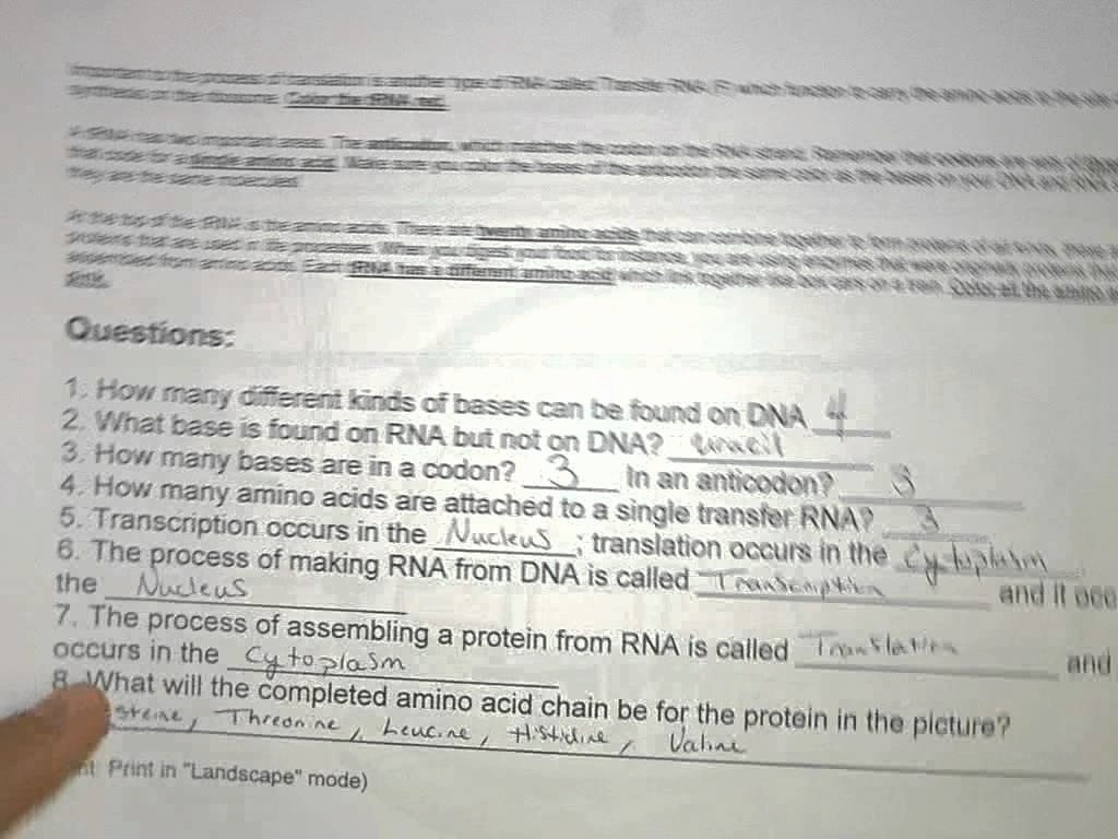Dna Coloring Transcription And Translation Answer Key Lovely