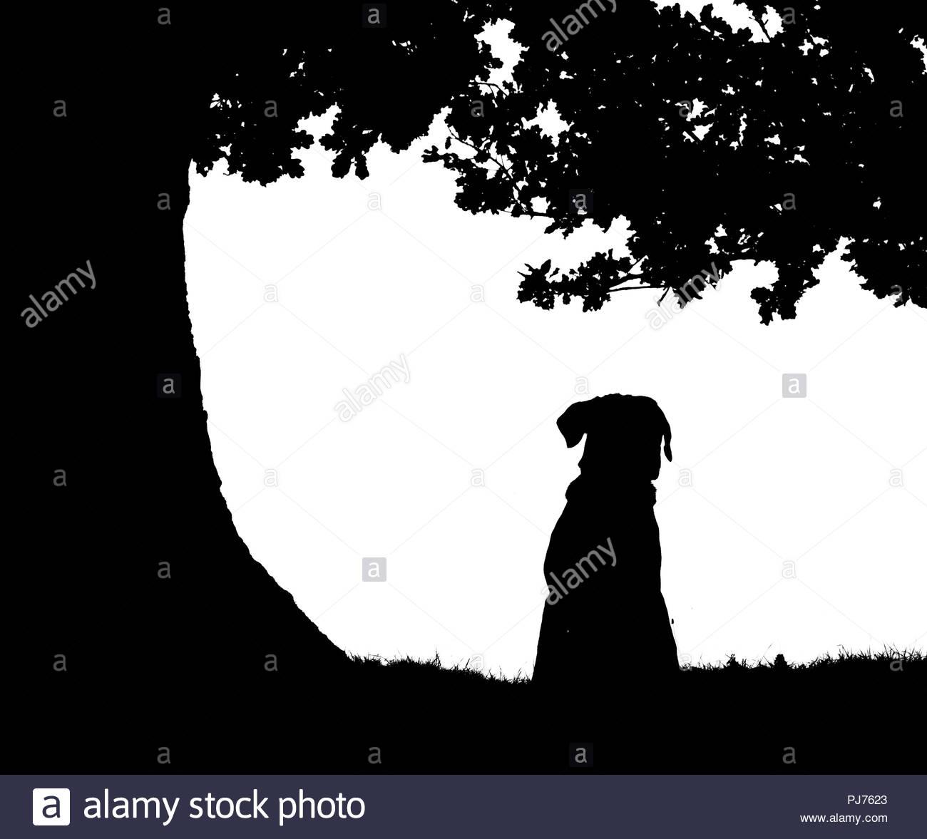 Dog Sitting Under An Oak Tree In Silhouette Stock Photo  217746651
