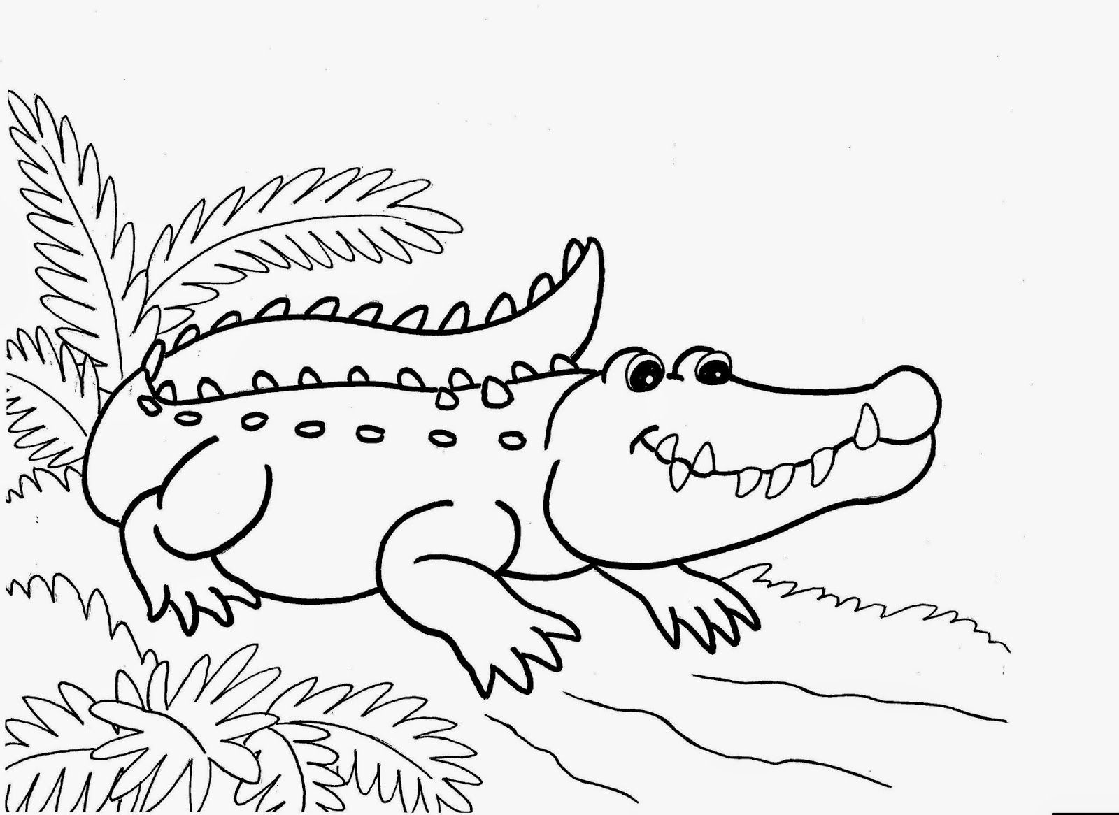 Crocodiles Colour Drawing Hd Wallpaper