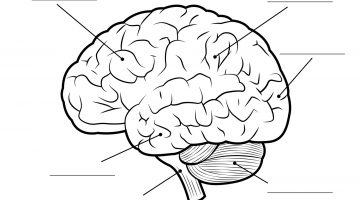 Brain Coloring Sheet