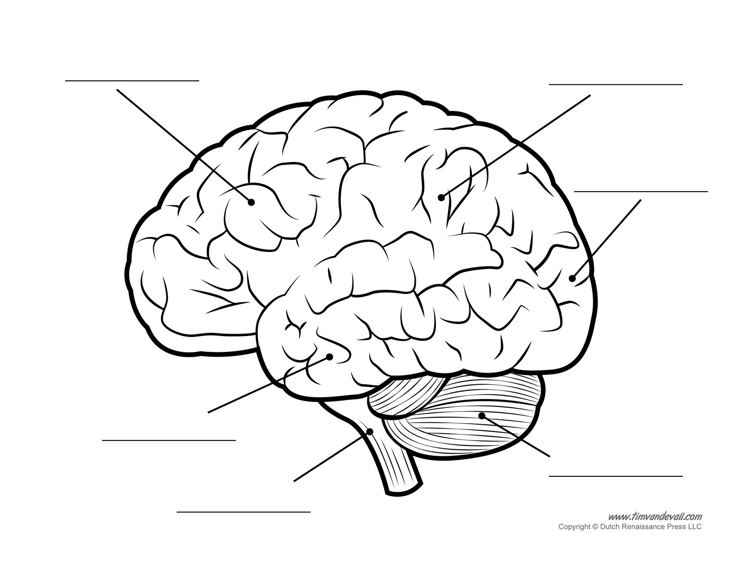 Coloring Pages ~ Staggering Brain Anatomying Pages Page The Book