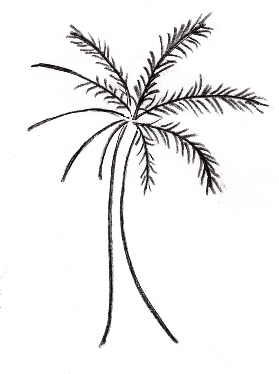 Free Palm Tree Drawing, Download Free Clip Art, Free Clip Art On