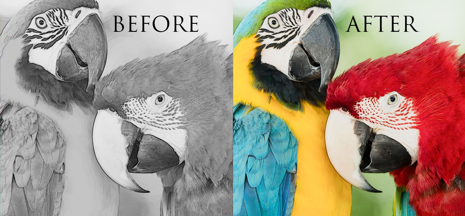 Have You Tried Greyscale Coloring Yet  It's Incredible!