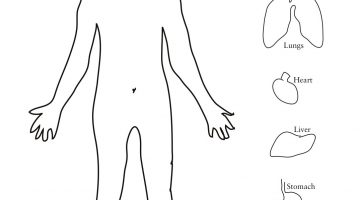 Heart Anatomy Coloring Pages