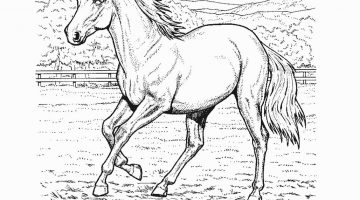 Horse Coloring Books For Adults