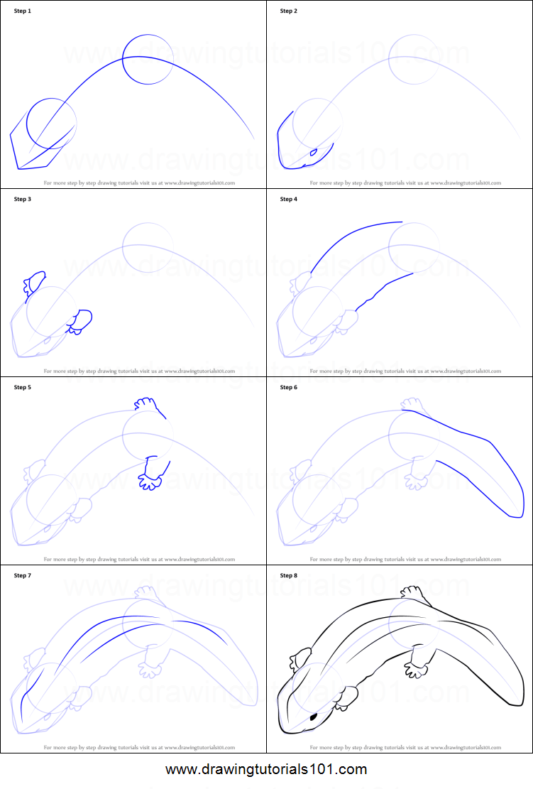 How To Draw A Chinese Giant Salamander Printable Step By Step