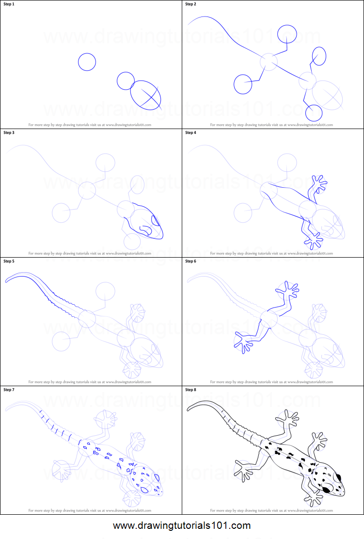 How To Draw A Gecko Printable Step By Step Drawing Sheet
