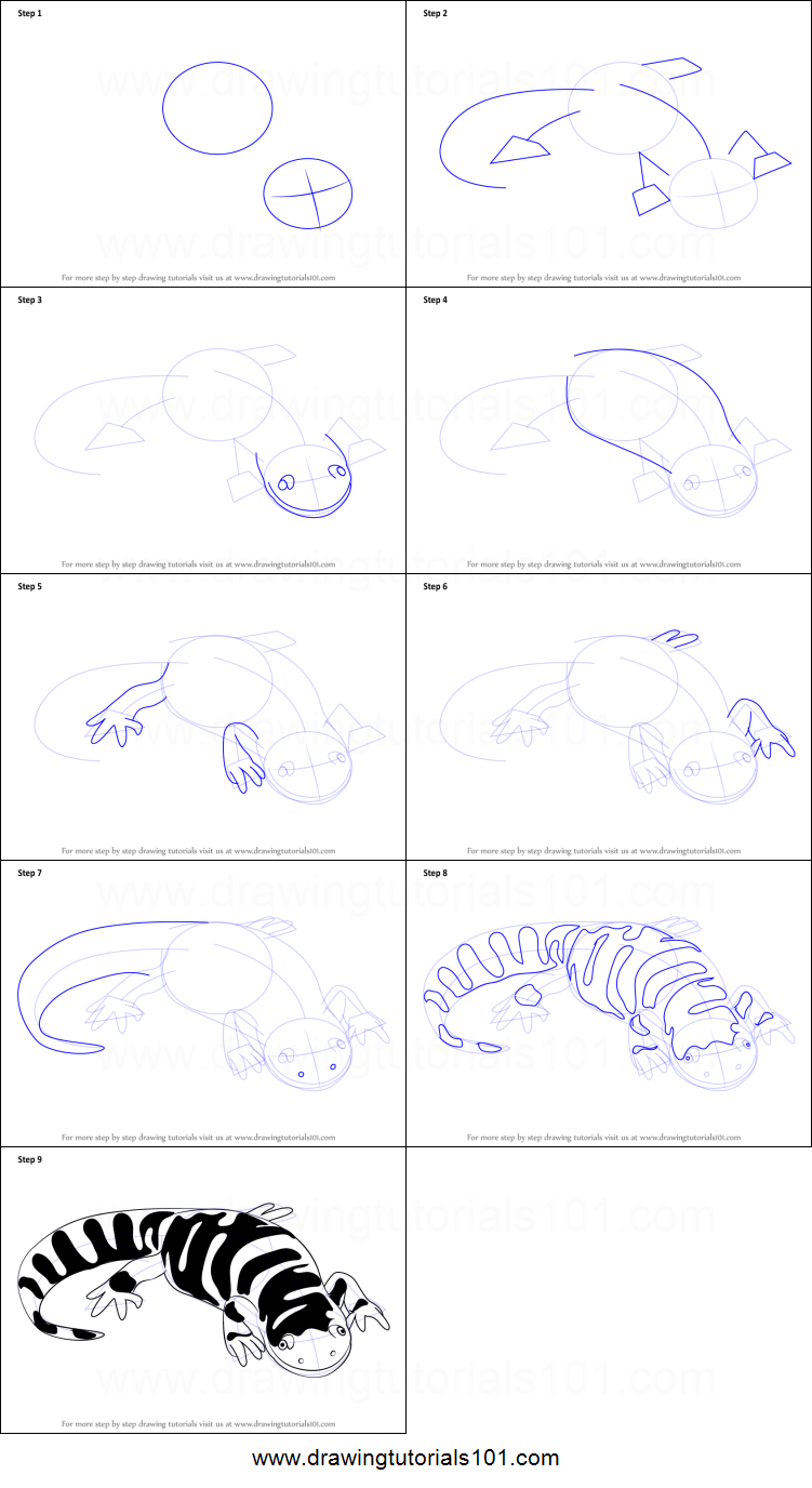 How To Draw A Tiger Salamander Printable Step By Step Drawing