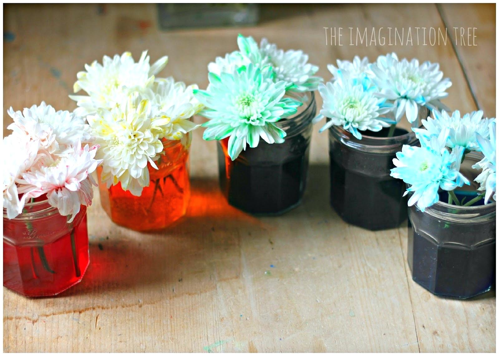 How To Dye Flowers With Food Coloring How To Dye Flowers With Food